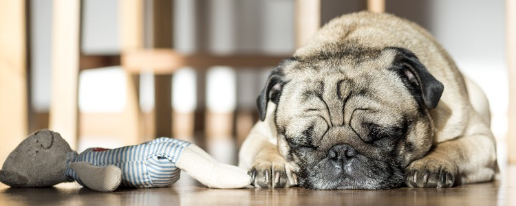睡眠リズムが乱れてきているので自分の睡眠状態をモニターします(Jowbone UP3)