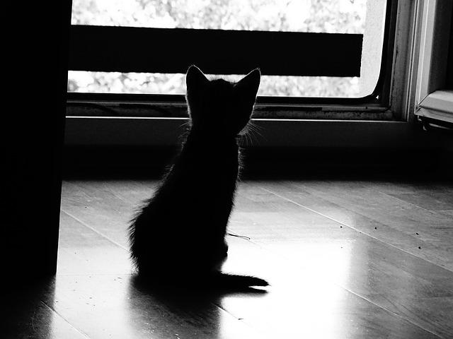 大切なペットの魂を癒やすために、あなたができること
